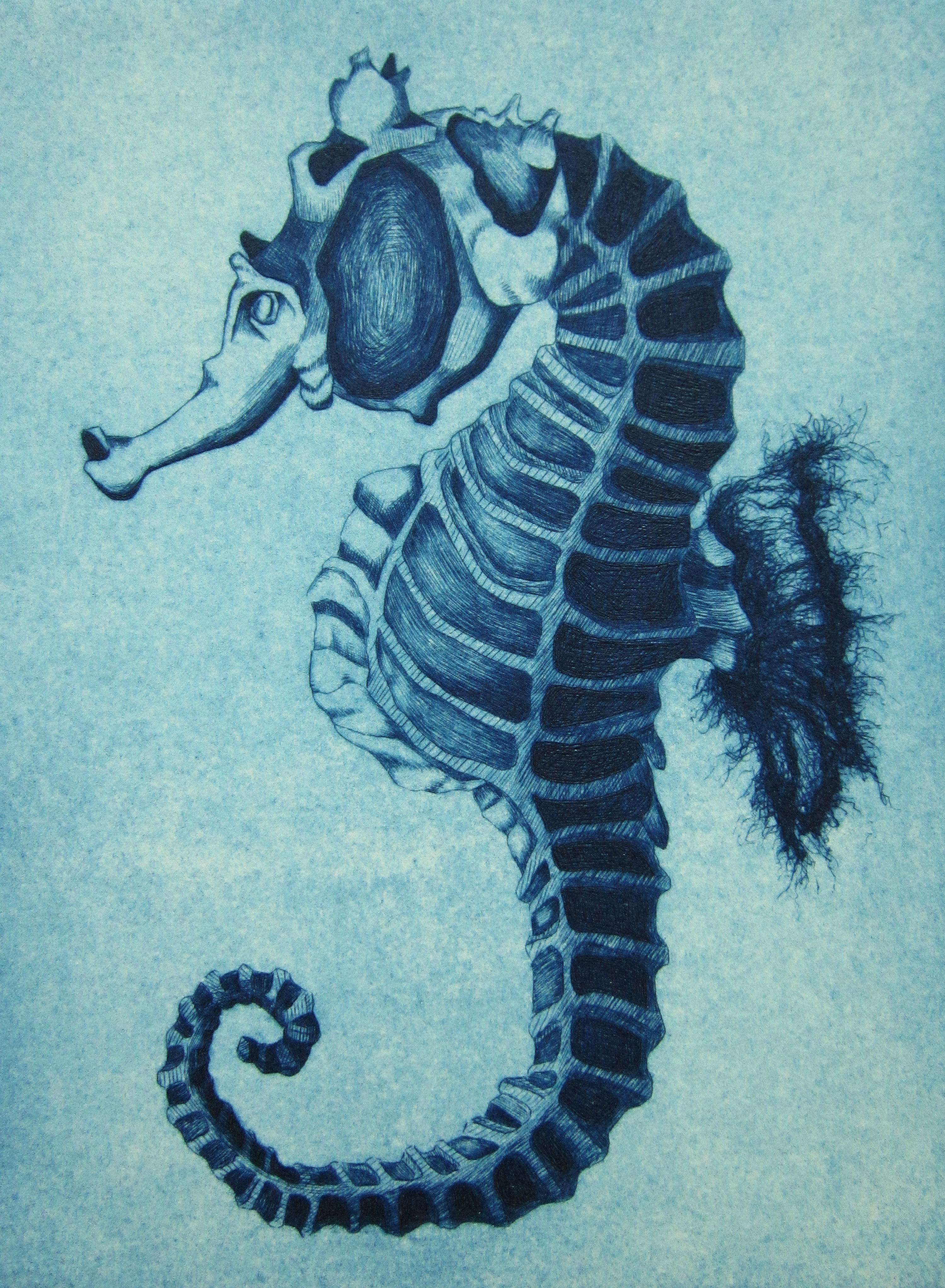 hippocampe  u2039 diane latrille dessins et gravures